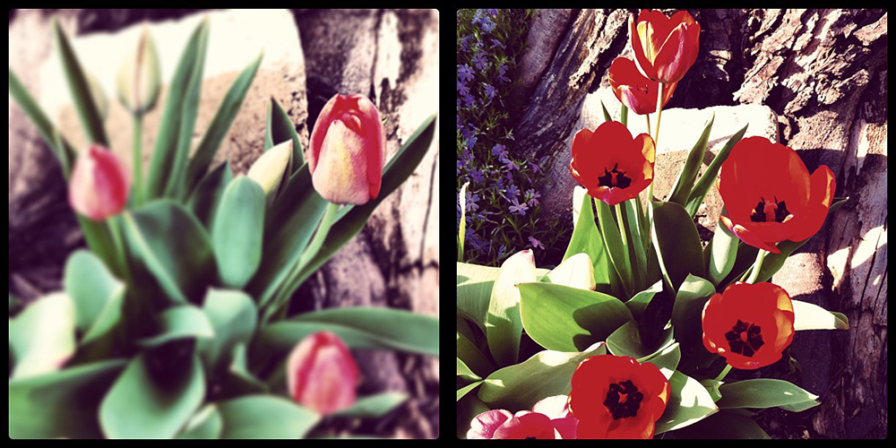 bloomers (instagram)