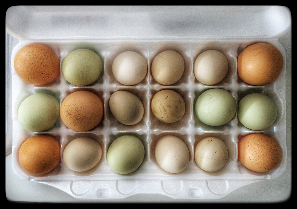 rainbow eggs (snapseed)